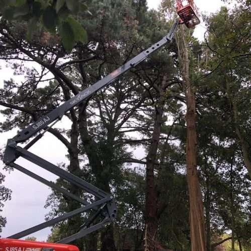 local tree arborists Arundel