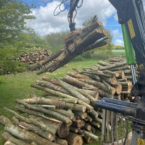 Tree removal services East Sussex