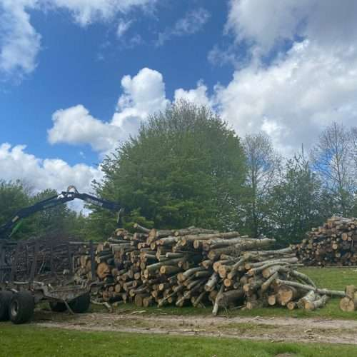 Forestry Services by Round Top Trees in West Sussex