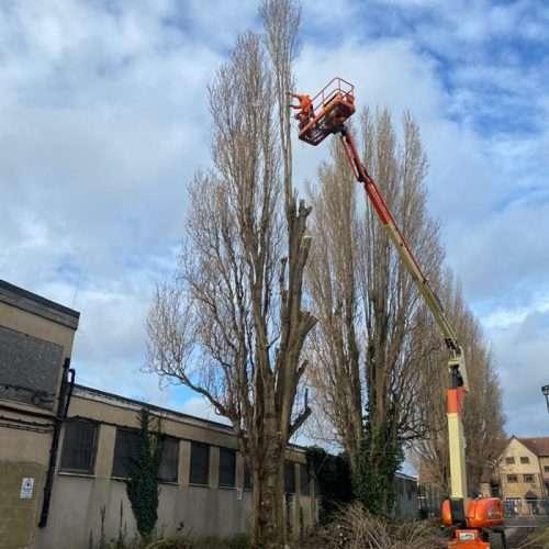 arborist tree care