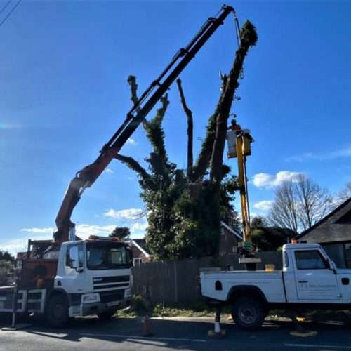 advanced tree surgery West Sussex