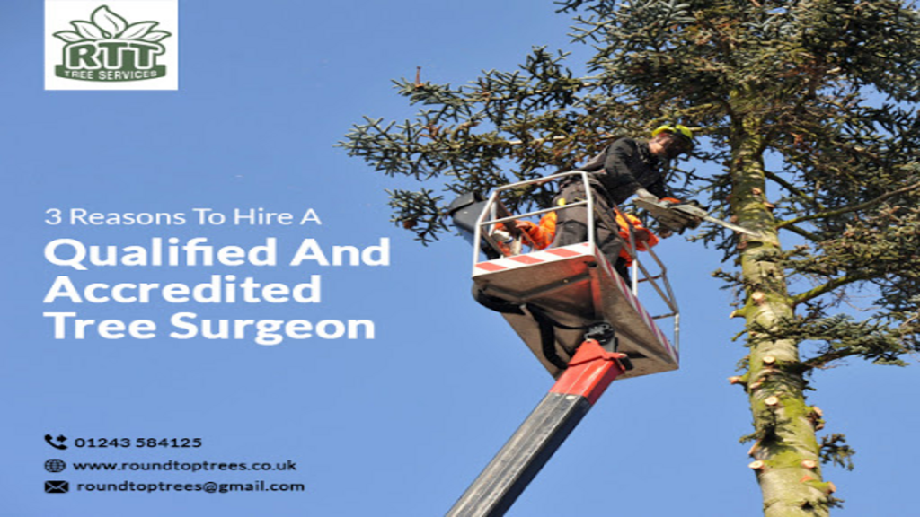 3 Reasons To Hire A Qualified Tree Surgeon