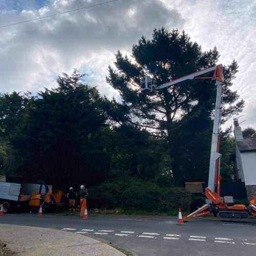 forestry services in West Sussex.