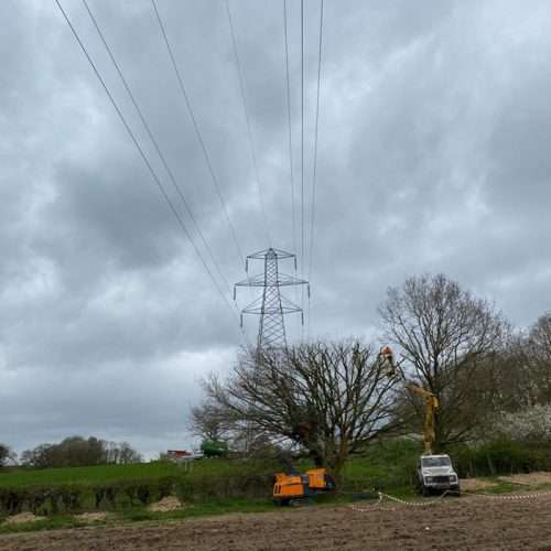 tree surgery in west sussex